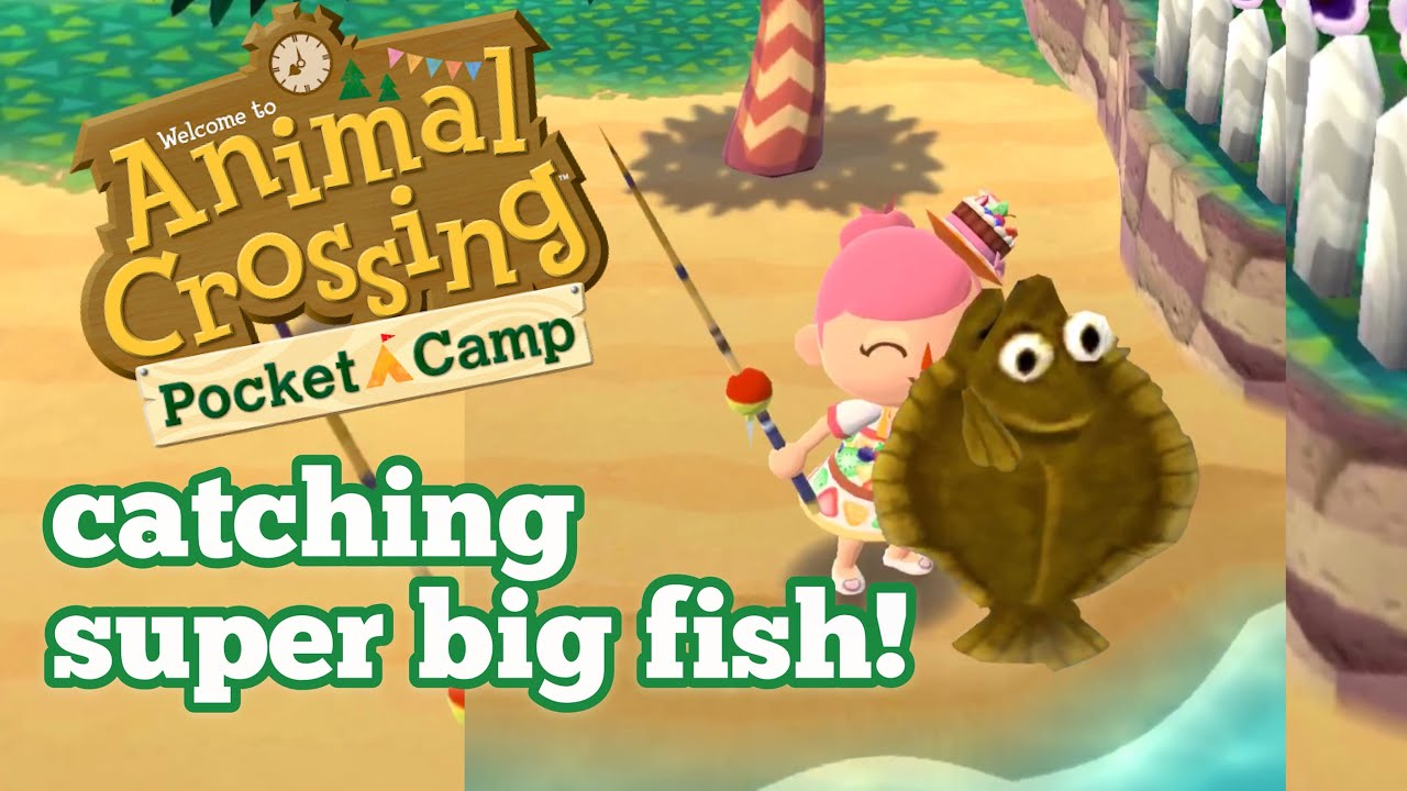 How To Catch Big Fish Animal Crossing Pocket Camp Gameplay King Olive Flounder Youtube Olive flounder are the exception. how to catch big fish animal crossing pocket camp gameplay king olive flounder