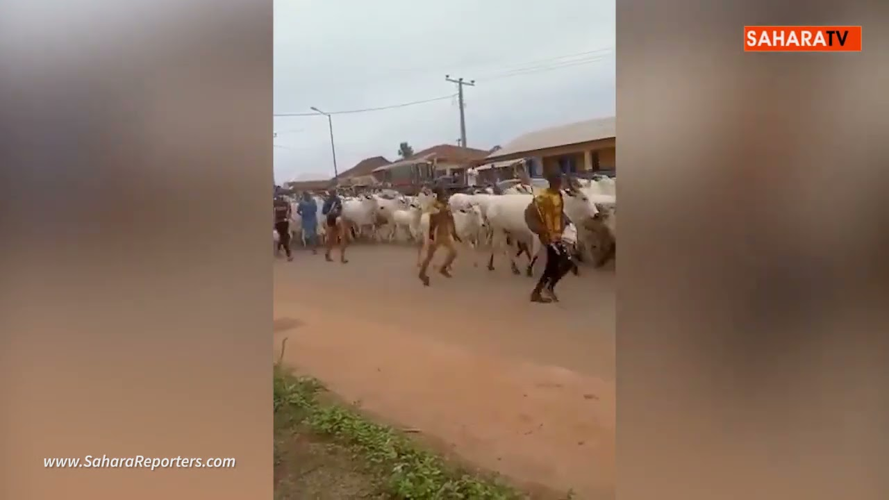 Youths Drive Herders, Cows Out Of Lagos Community, Ask Neighbours To Do The Same