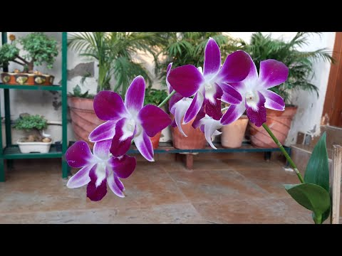 How to Care for Orchid Plant || Orchid Flower || Fun Gardening || 31 Oct, 2017