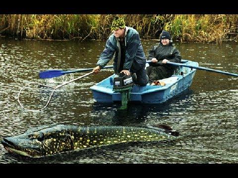 Рыбалка.Ярославль.р.Которосль - YouTube
