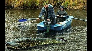 ЩУКА МОНСТР САМАЯ БОЛЬШАЯ РЫБА 2017 В МИРЕ пойманная рыба Щука САМАЯ КРУПНАЯ Рыба ЩУКА 80 кг Рыбалка
