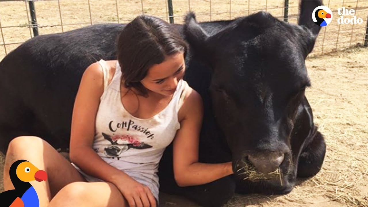 Teen Rescues Farm Animals From Craigslist & Gives Them a Second Chance | The Dodo