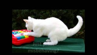 Cat Behavior Problems-guide Book