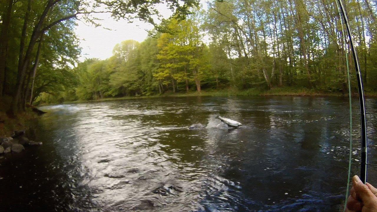 Fly fishing for big, fresh run salmon in the famous Mörrum ...