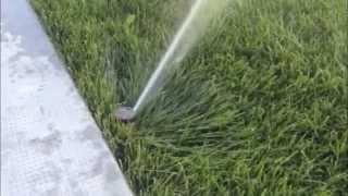3 Consigli per Irrigare bene il Prato