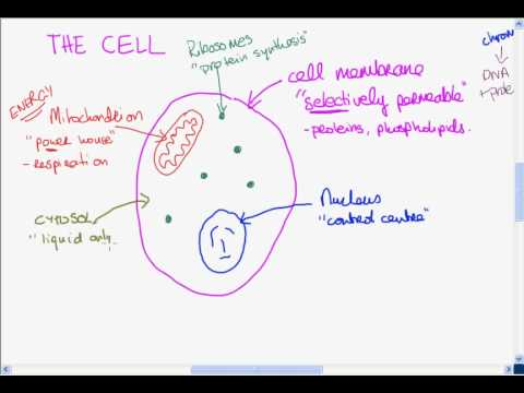 The basic structure of the cell youtube the basic structure of the cell ccuart Image collections