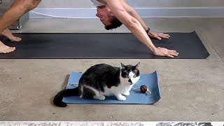 Kitty Zens Out On His Very Own Yoga Mat