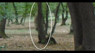 On The Spot - Hutan Hoia Baciu, Hutan Angker Penuh Misteri