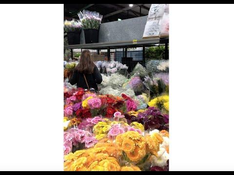 Introducing Rachel Read At Sydney Flower Markets!