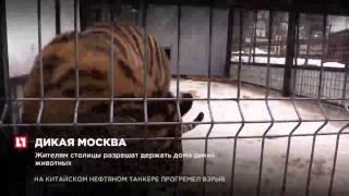 Жителям столицы разрешат держать дома диких животных