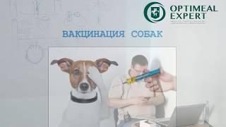Промо відео: Лекція для заводчиків. Інфекційні Хвороби собак. Лектор Дмитро Морозенко