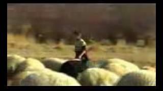 Kürtçe şarkı söyleyen çoban