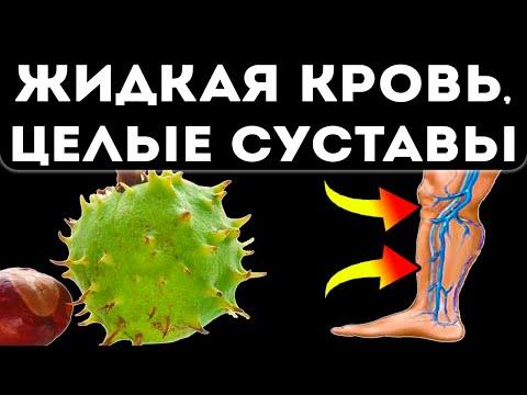 Конский каштан — конское здоровье! Вот какими станут сосуды и суставы всего после…