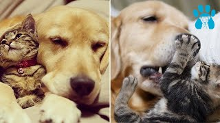 VIDEOS OF CUTE Cats and DOGS playing-Compilation