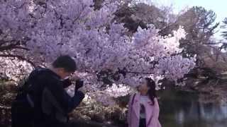 新宿御苑のお花見 外国人が一杯 2015.3.25 thumbnail