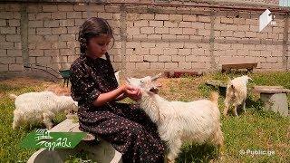 ექვსი წლის ნანუკა ერთი ოცნებით - ჰქონდეს მსოფლიოში საუკეთესო ფერმა