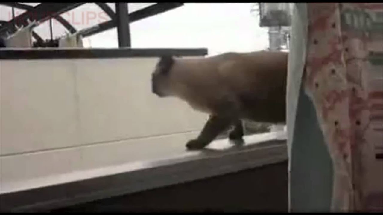 FAT CAT EPIC JUMP FAIL