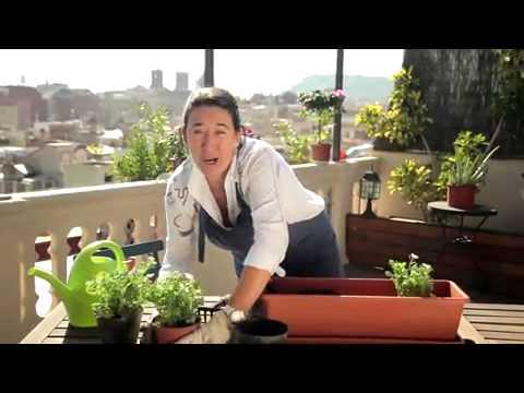 El jardinero en casa gerbera funnycat tv for Jardinero en casa
