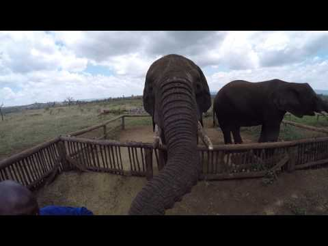 Feeding elephants in South Africa!