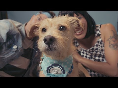 Mike Jones - Matt and Kim's New Money Video Is For The Dogs