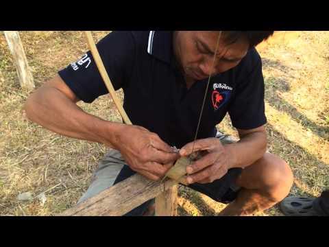 วิธีดักนกบนต้นไม้ของชาวบ้านในเชียงราย: fowling chiangra
