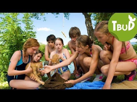 Katzenjammer (Folge 10) | Tiere bis unters Dach | SWR Kindernetz