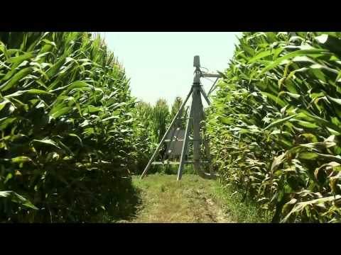 Quinta da Cholda, agricultura intensiva e sustentável