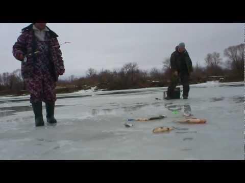ловля густеры зимой на течении на оке