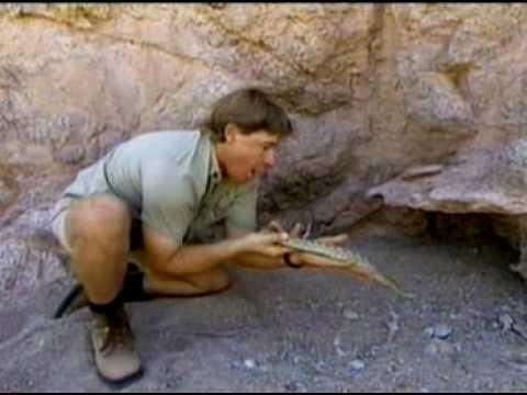Steve Irwin Mojave Rattlesnake