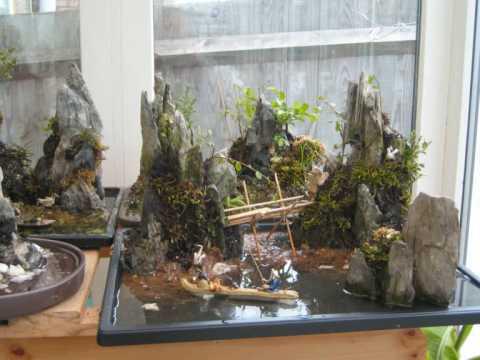 bonsai landscapes and garden views