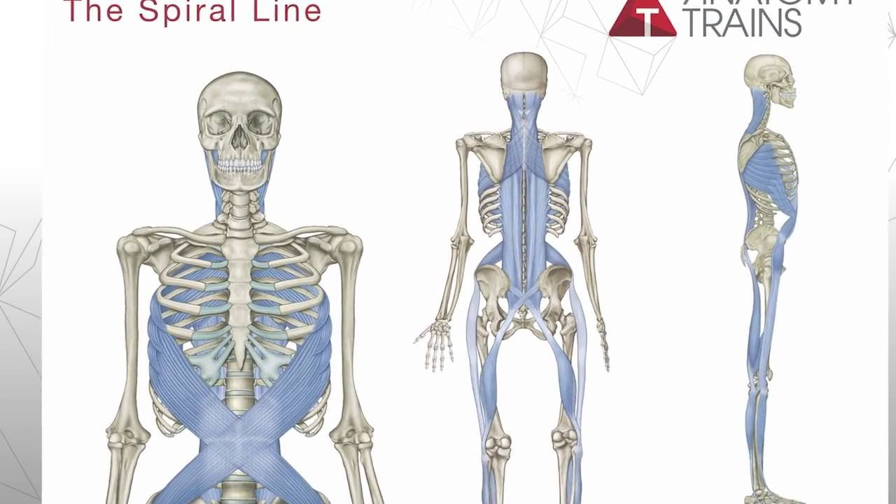 Tom Myers Introduces Anatomy Trains 3rd Edition - YouTube
