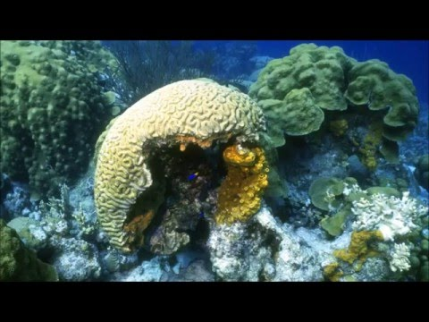 Ocean Life - SlideShow With Relaxing Classical Music