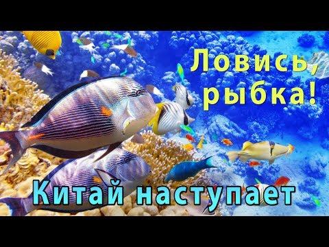 Рыбные державы. Кто