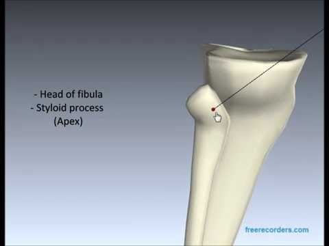 Anatomy of the Tibia and Fibula