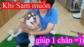 Làm cỏ nhân tạo cho Pug Baby mà thằng Sam nó cứ muốn phụ 1 chân =)) PUGK PET