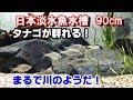 タナゴ水槽スタート!【日本淡水魚水槽90cm#10】 の動画、YouTube動画。