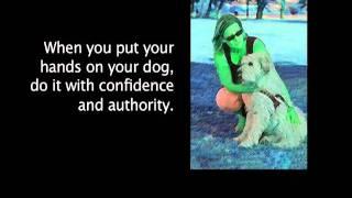 Learning Dog Behavior And Body Language