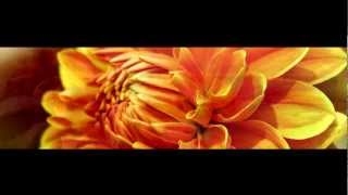 Area 39 - Sparkling (Aphrodite Remix)