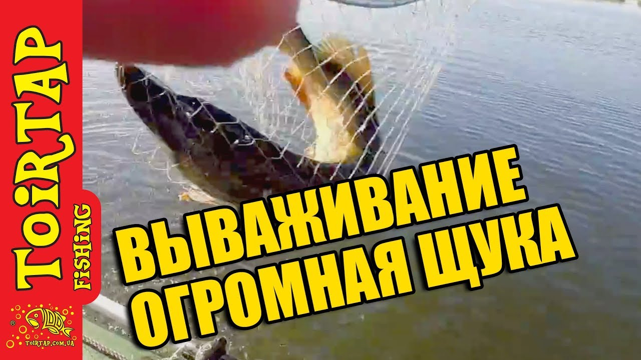 рыбалка на ахтубе на щуку