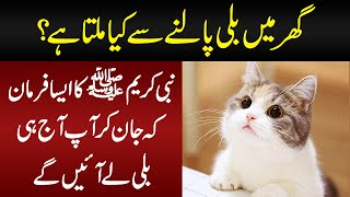 What Does Islam Say About The Most Popular Pet Cat? | Lesser Known Facts About Cats
