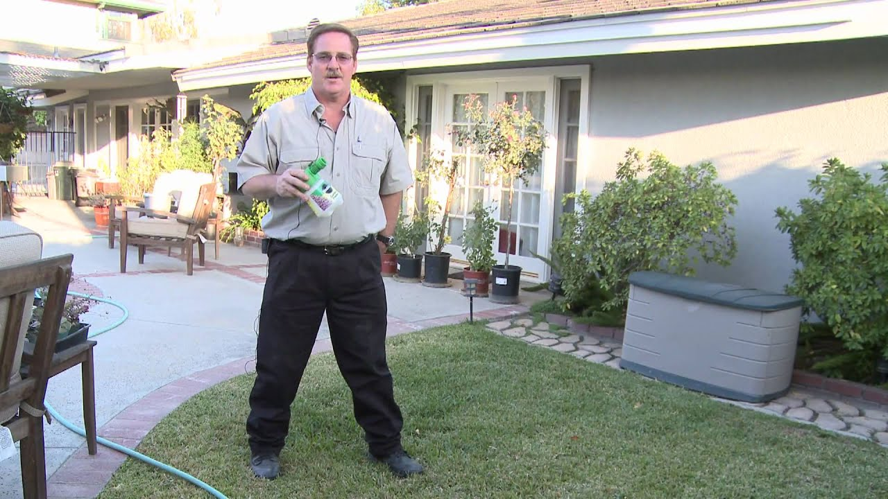home u0026 lawn pest control how to get rid of moles in your lawn
