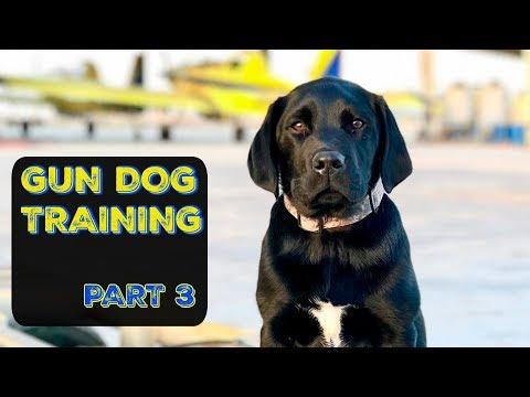 Training My DUCK DOG | Pt. 3