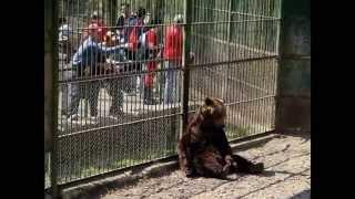 Ana Navarro - Donde existe el miedo (Zoos: cárceles para animales)