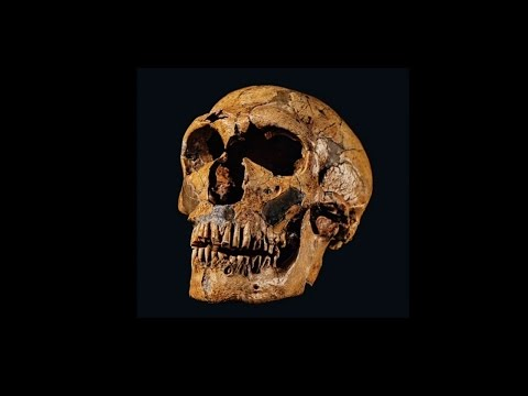 Denisovans: A New Cousin at the Family Reunion
