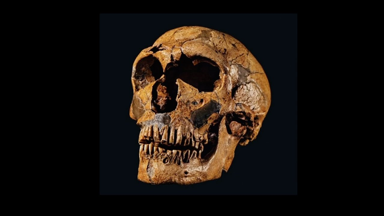 Ancient skulls may belong to elusive humans called Denisovans By Ann Gibbons Mar 2 2017 200 PM Since their discovery in 2010 the extinct ice age