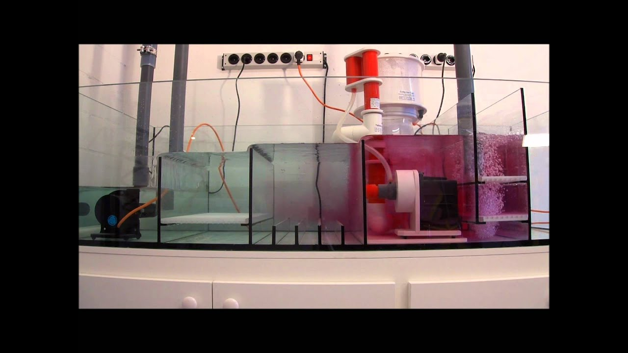 str mungsverh ltnisse in meinem meerwasser technikbecken. Black Bedroom Furniture Sets. Home Design Ideas