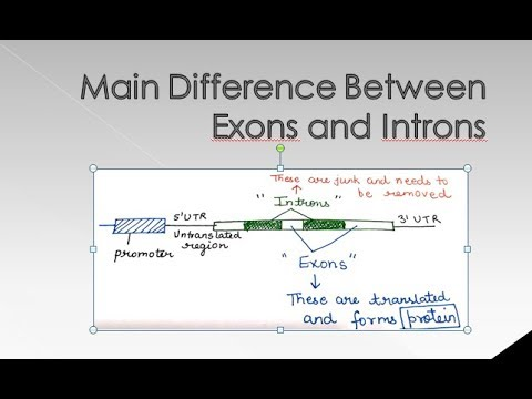 Introns And Exons By Jyoti Verma