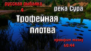 Русская рыбалка 4(рр4) - река Сура. Трофейная плотва.