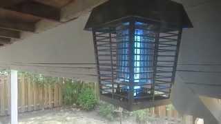 Wasps vs. Electric Bug Zapper near Dayton. Oregon