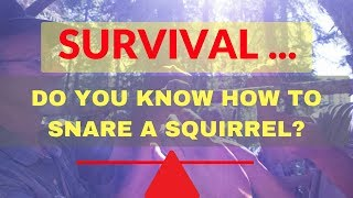Survival Snaring - How to snare for survival